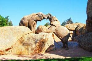 Bioparc-Valencia-elefantes-en-la-Sabana-africana-del-parque-1
